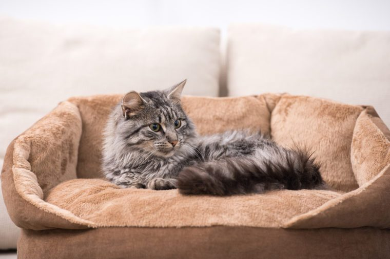 Cute cat is lying in his cat bed.
