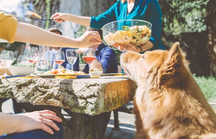 Group of friends eating outdoor. sitting outside and enjoying food. Woman feeding her dog