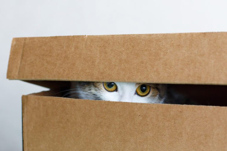 The cat hides in the box, white background, close-up, big eyes look out of the box