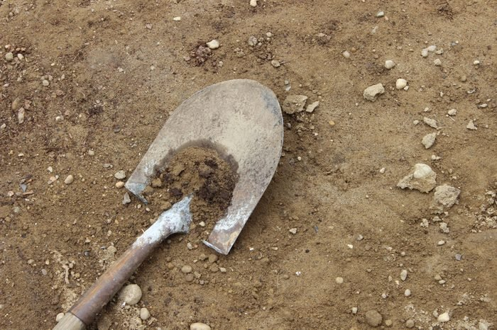Old shovel with wooden handle digging into the dirt