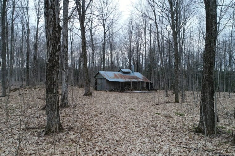Rustic Old Maple Syrup Shack In The Woods In Early Spring