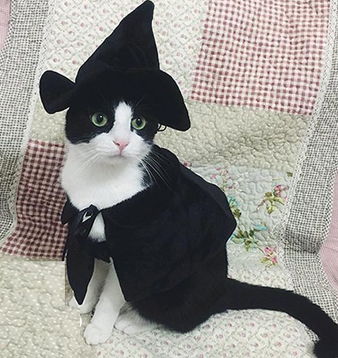 Cute Hooded Cloak Witch / Wizard Costume for Dogs & Cat Kitten, Cat Costume Pet Cosutmes