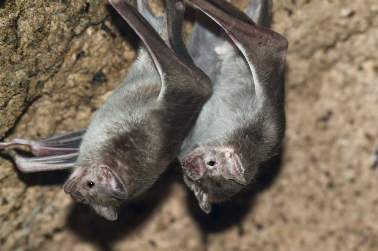 Clear Signs Your House Has a Bat Infestation | Reader's Digest