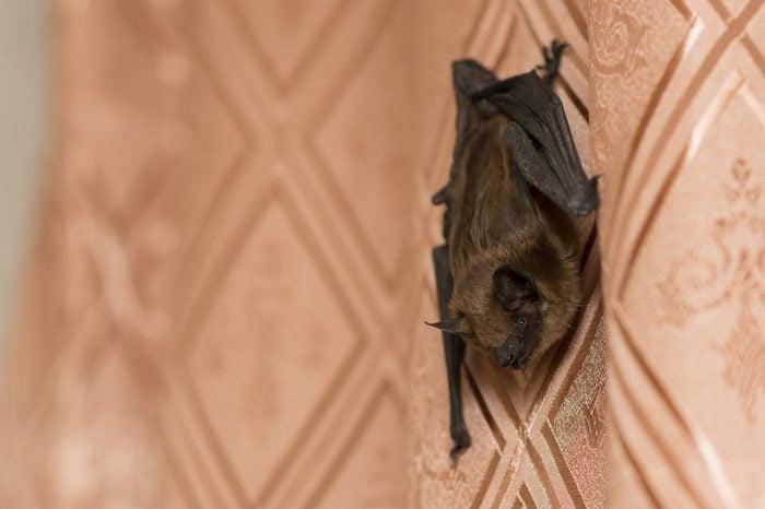 Bat in the apartment