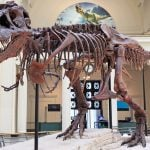 12 of the World's Best Dinosaur Museums