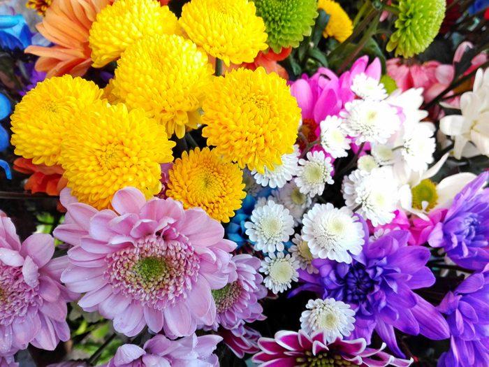 Colorful different chrysanthemum pattern floral shop. Chrysanthemum annuals pink yellow green white violet chrysanthemum background card. Detail of many chrysanthemum flowers closeup wallpaper design