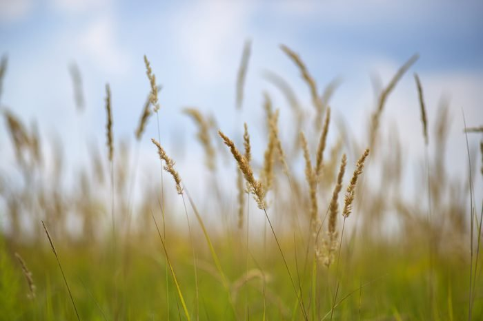 grass prairie