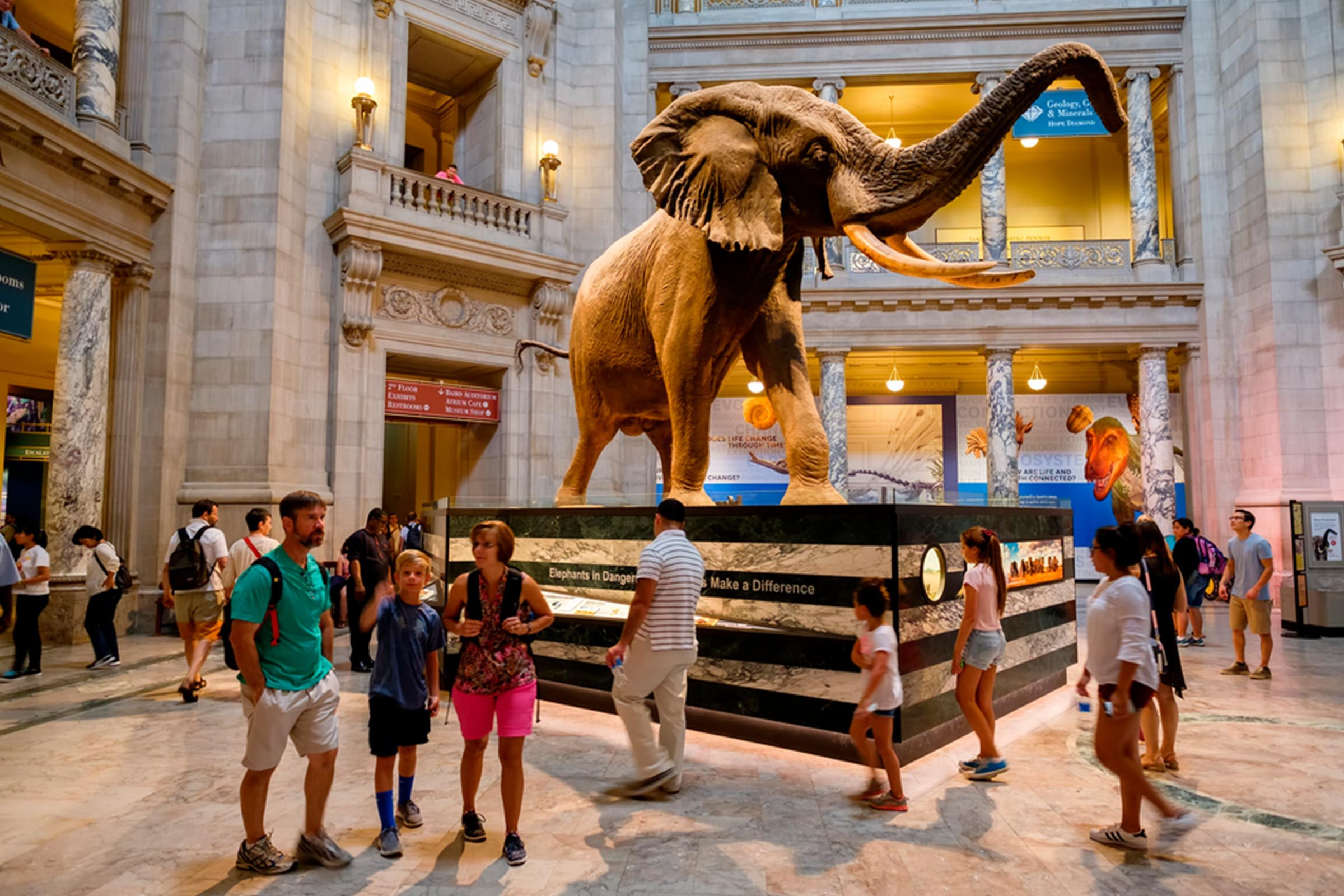 National museum of natural history in DC