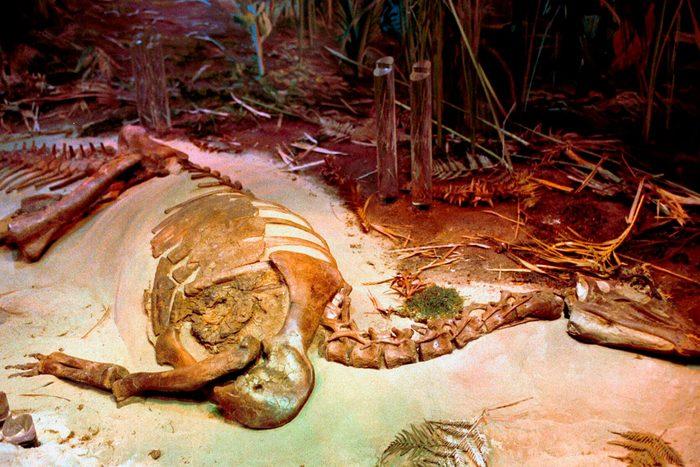 North Carolina Museum Natural Sciences