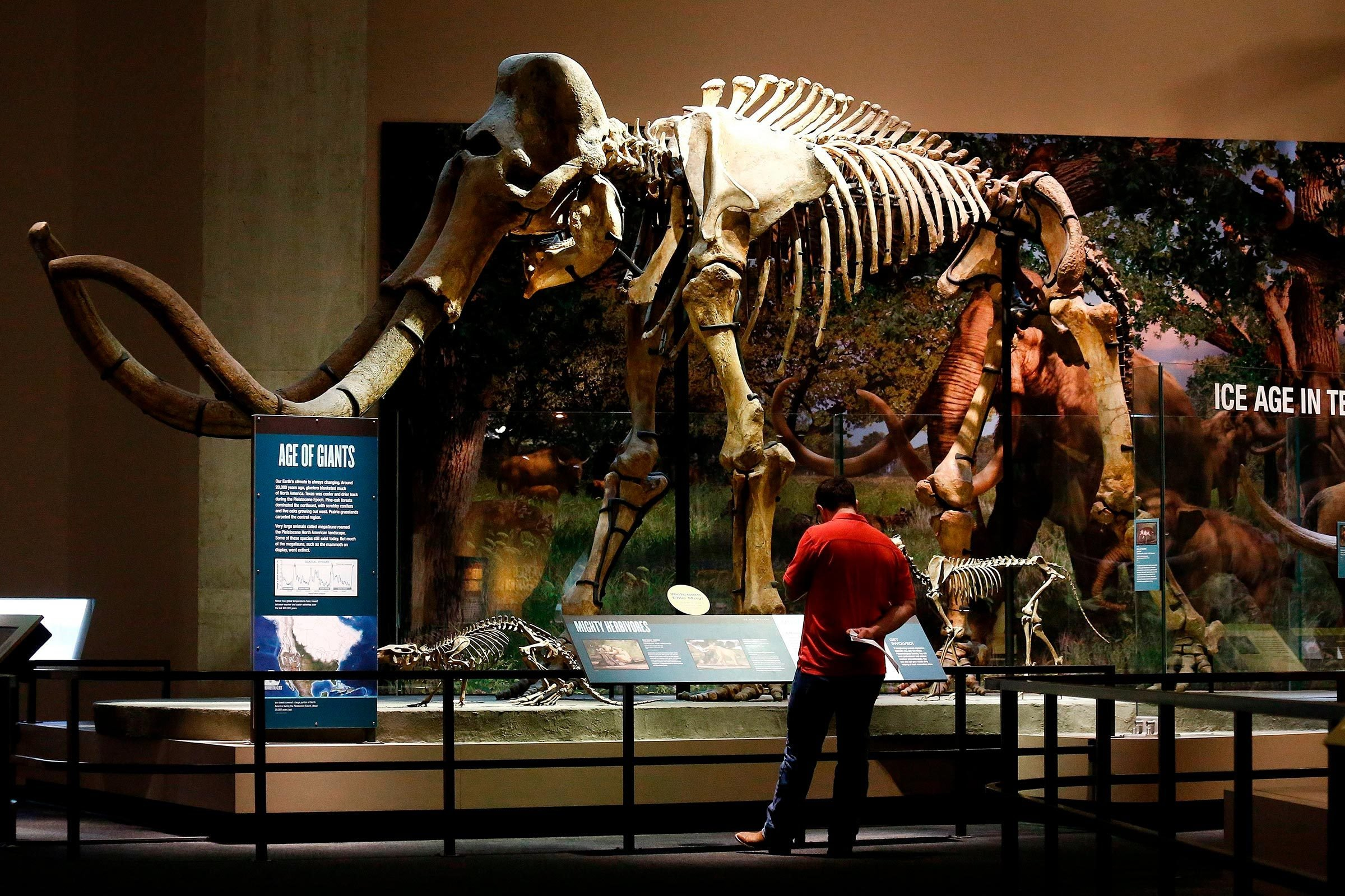 Image result for DINOSAUR MUSEUM