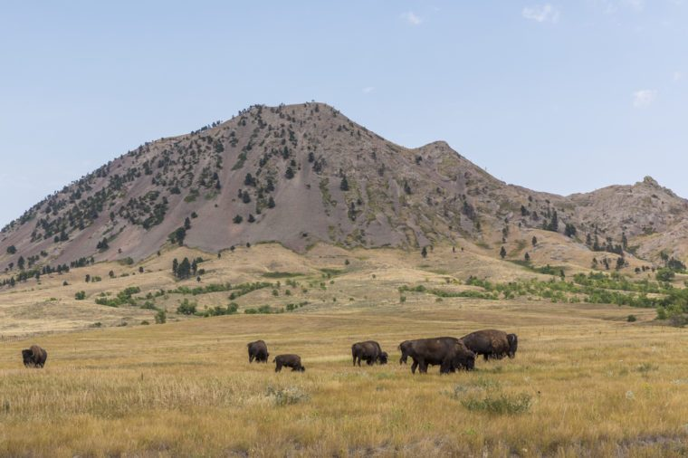 Bear Butte with Buffalo