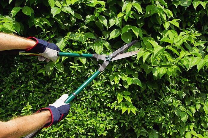 cut a hedge