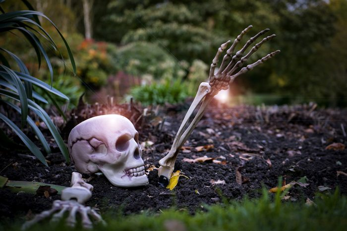 Halloween outdoor decoration in the garden with decorated by fake skull in evening light, bones hands for old American or English trick-or-treat Halloween tradition, Halloween background concept