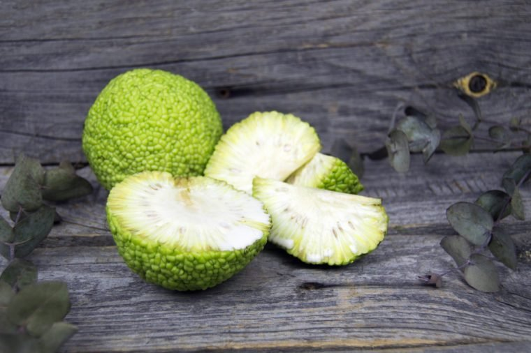 Maclura pomifera fruit as known as osage orange, horse apple, adam's apple and Monkey brain fruit. On wooden background