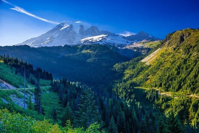 Overlooking a valley forest of pine trees with snow covered Mt. Rainier in the distance during late afternoon on a blue sky day, Mt. Rainier National Park, Washington, USA.