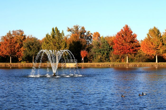 Autumn by the Pond