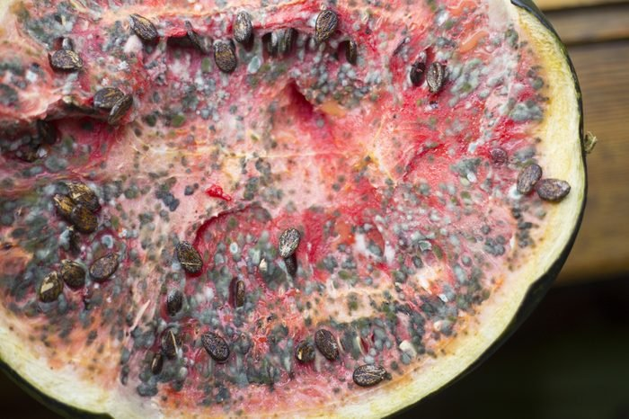 rotten watermelon with mold