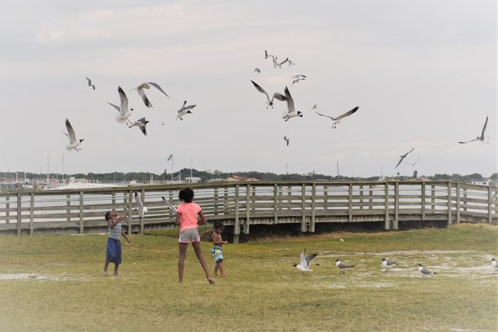 Gulfport, Florida, April 2018 African American kids are feeding and playing with seagulls