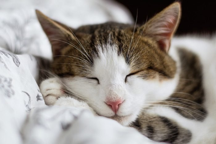 A closeup of a cat sleeping on a blanket