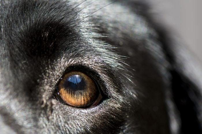 Blue sky reflected in dogs eye