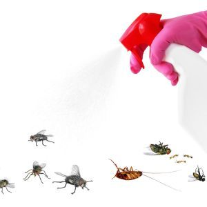 This Trick Will Get Rid of Most Insects Around Your Home