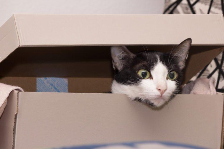 cute black and white Cat hiding in paper box