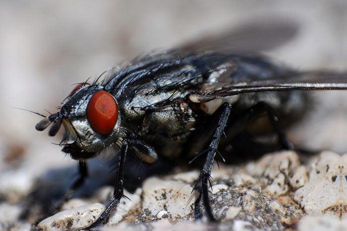 Macro of big fly on old wall