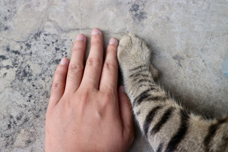 Love, Hand of human and hand of cat, place together on floor, tiger pattern cat, hand