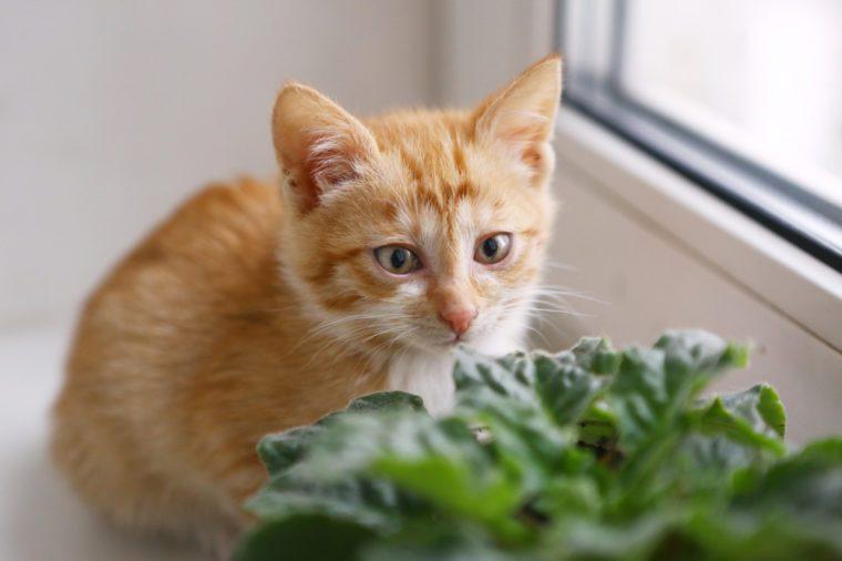 red little kitten on windowsill close up photo