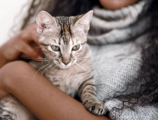 Young african woman with cat indoors