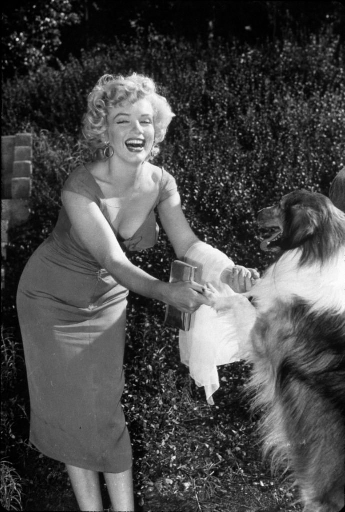 VARIOUS FILM STILLS OF 'NIAGARA' WITH 1953, ANIMALS (WITH ACTORS), DOG, HENRY HATHAWAY, LASSIE, MARILYN MONROE, LAUGHING, PLAYING, DRESS IN 1953