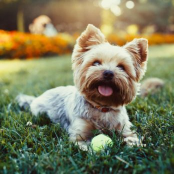 The Most Popular Dog Names for the Most Popular Dog Breeds of America