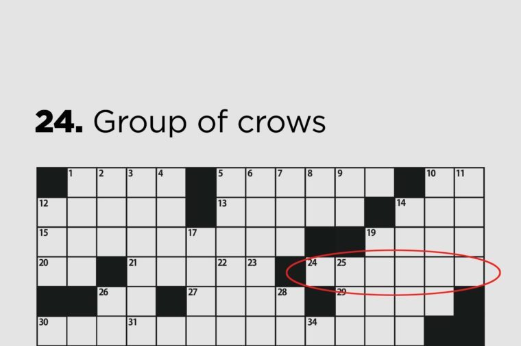 group of crows