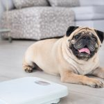 """10 Signs Your """"Healthy"""" Pet Is Showing Dog Illness Symptoms"""