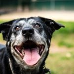 13 Signs You Should Think Twice Before Adopting That Shelter Dog