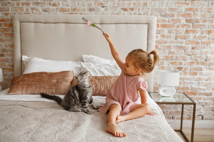 Little cute girl playing with kitten on sofa at home. Lifestyle child photo