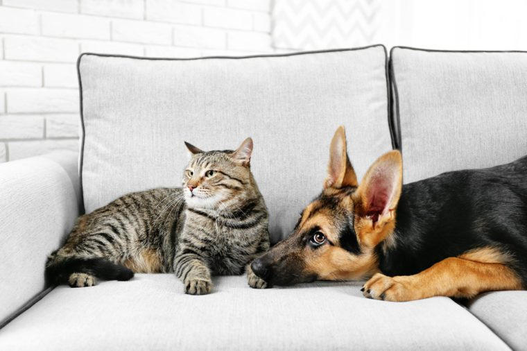 Cute cat and funny dog on couch