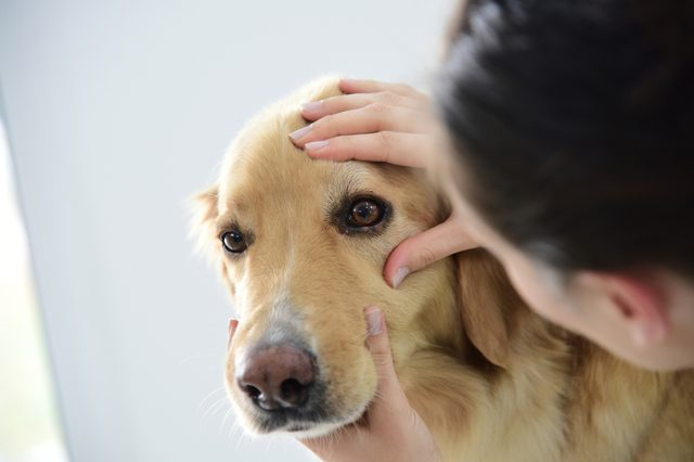 Veterinarian checking dog's eye