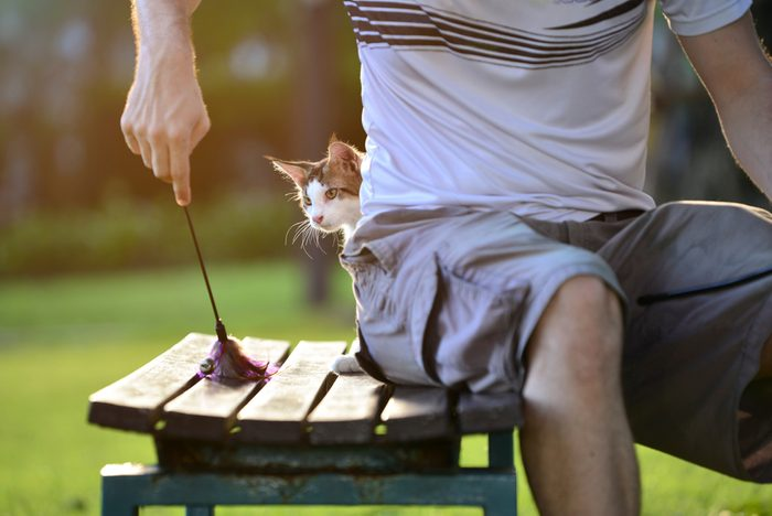 A cute healthy brown tabby white small cat hiding behind a man waiting to attack a toy on a wooden garden chair in a green park. Kitten playing with the owner in evening lighting