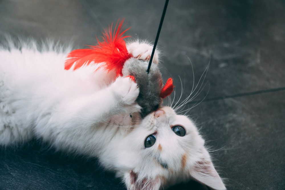 Little kitten fighting with mouse toy