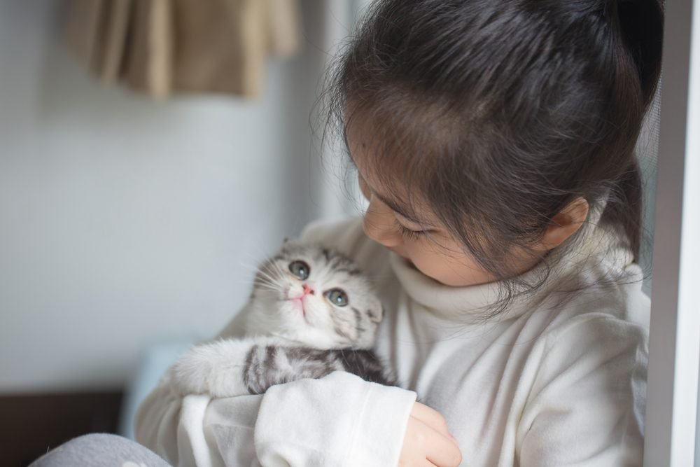 Happy little Asian girl cuddle lovely scottish fold kitten