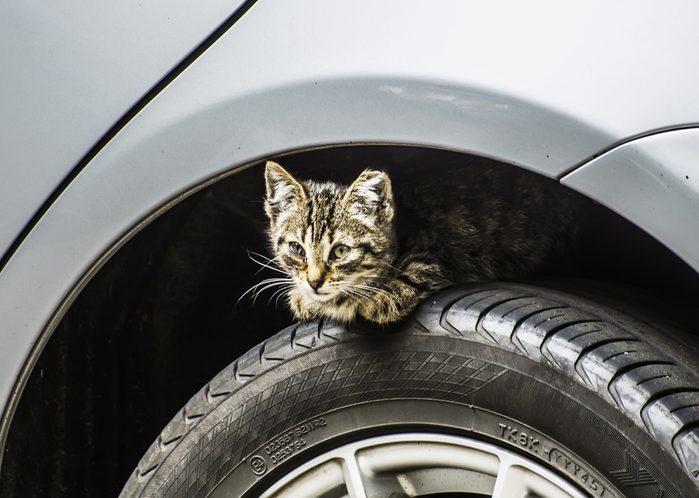 kitten on the wheel of a car