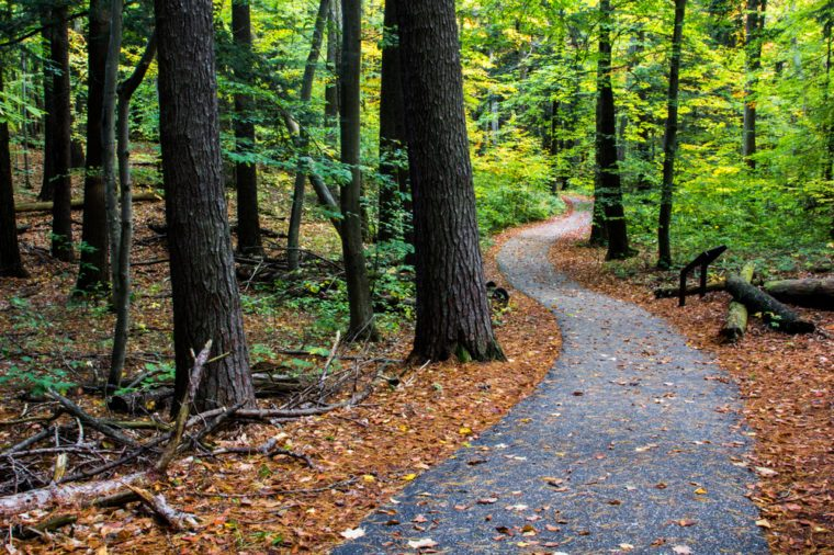 Wooded Path in Michigan