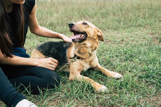 Young woman playing with beautiful dog outdoors in the park. Shelter dog and volunteer concepts