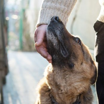 13 Biggest Mistakes People Make When Adopting a Shelter Dog