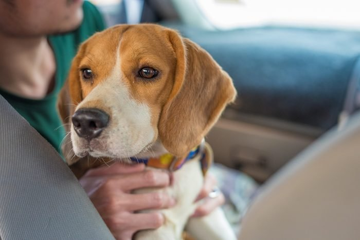 Beagle to travel out of the old house.
