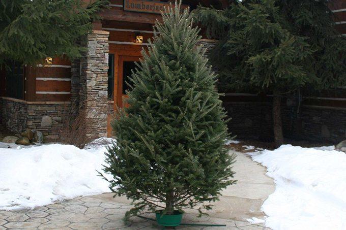 tree at lodge