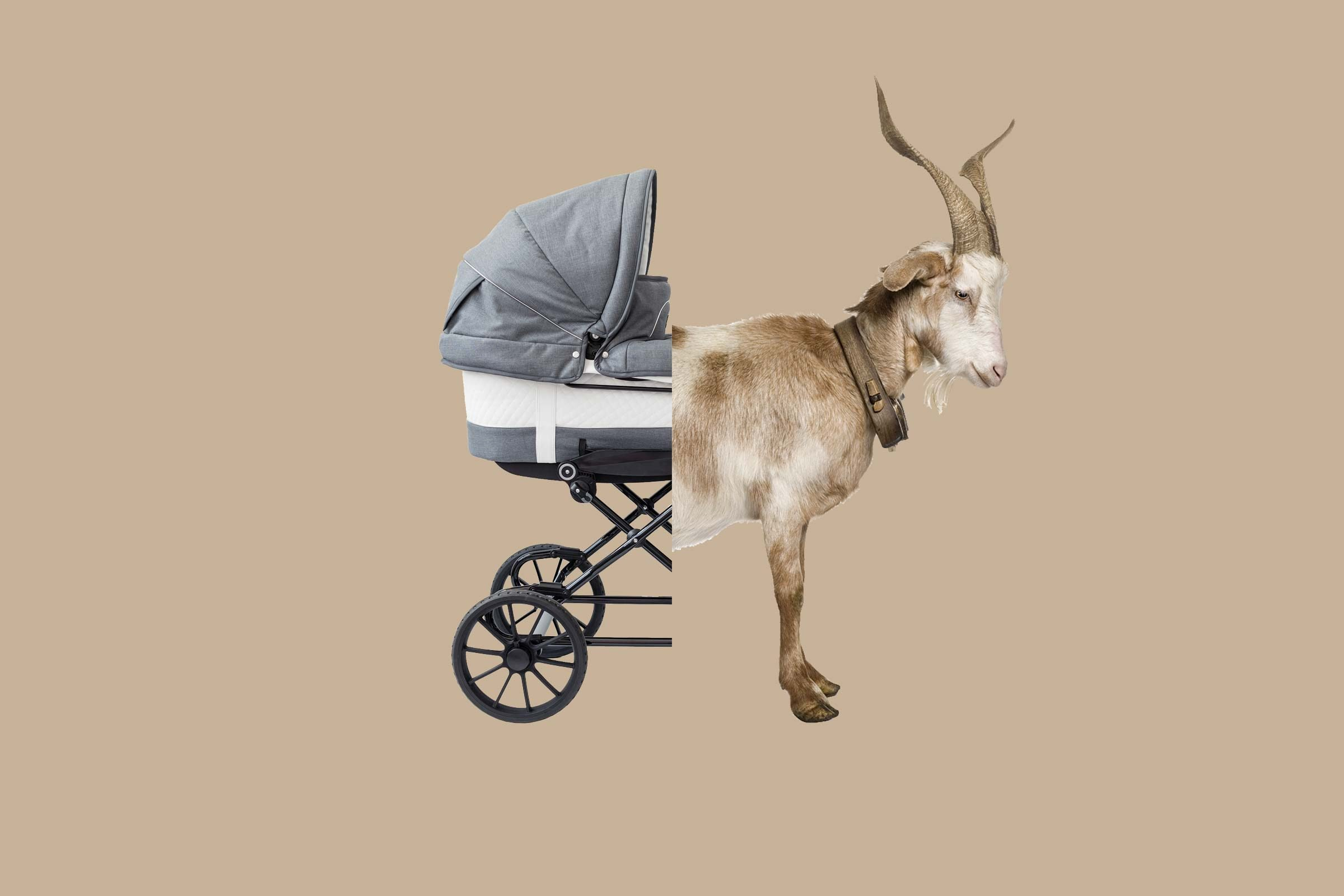 first stroller was pulled by a goat