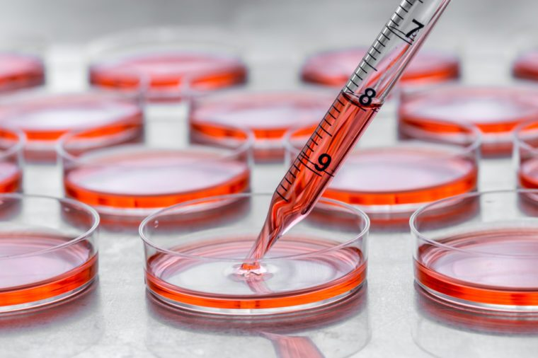 Culturing cells in tissue culture plates.