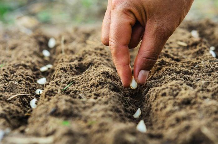 vinegar uses germinate seeds